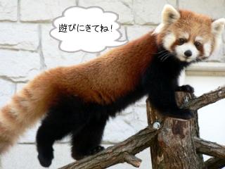 maruyama.jpg